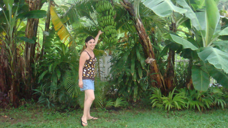 Chris's wife standing next our banana tree, banana pods almost the size of her