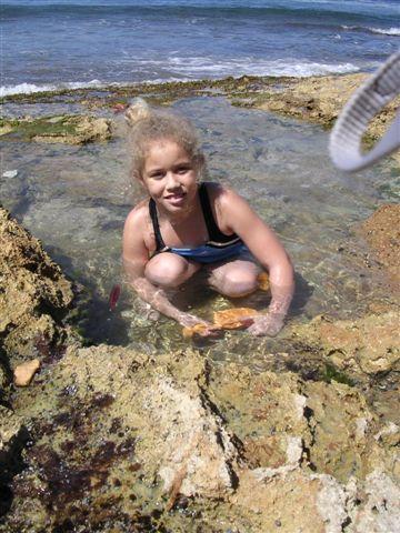 searching for hermit crabs, rincon pr rincon puerto rico